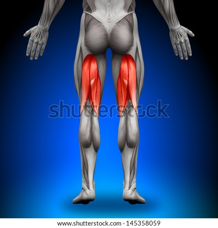 Hamstrings - Anatomy Muscles - stock photo