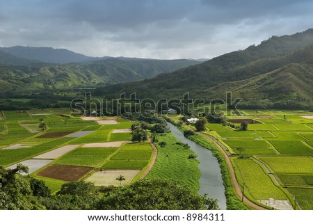 Hanalei River flows through the Taro fields near the historic Haraguchi Rice Mill on Kauai, Hawaii. The fields are illuminated by sunlight filtering through storm clouds. - stock photo