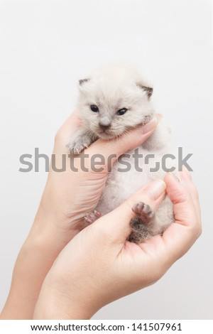Hand and cat in white background