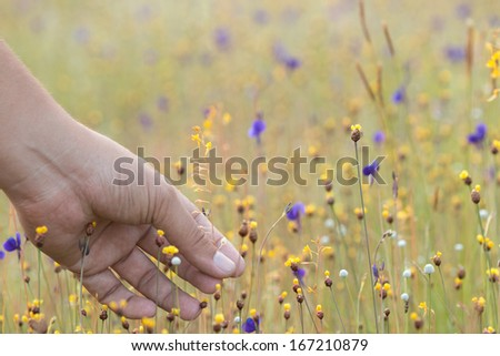 hand and grass - stock photo
