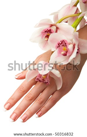Hand and orchid over isolated white background - stock photo