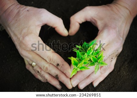 Hand and plant.heart - stock photo