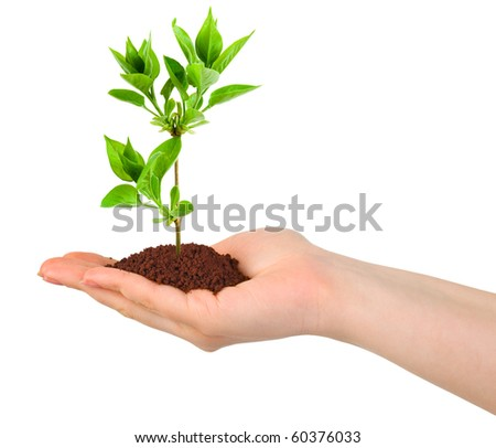 Hand and plant isolated on white background - stock photo
