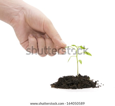 hand and plant over white