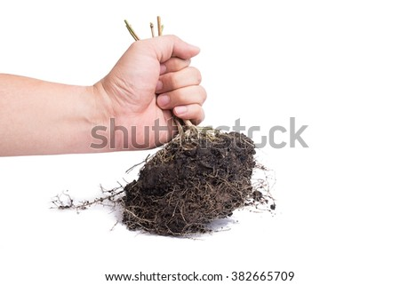 hand and Root Plant with soil isolated on white background