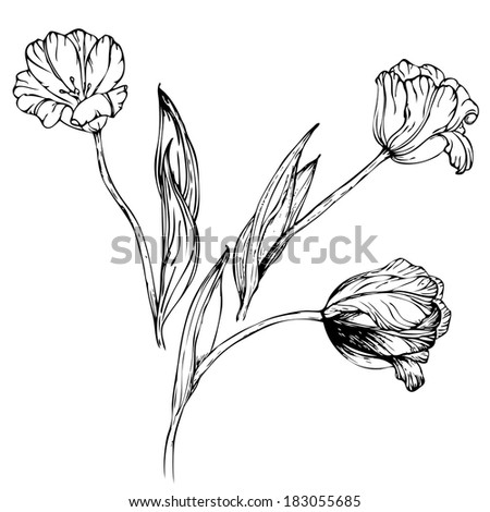 Hand drawing black and white tulips flowers
