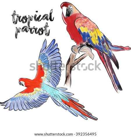 hand drawing painting parrot,Colorful parrots. Beautiful macaw - stock photo