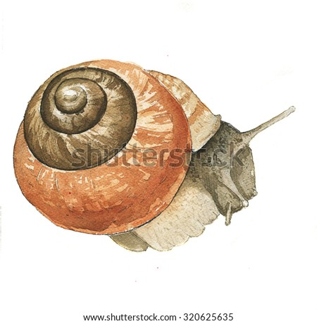 hand drawing watercolor snail - stock photo