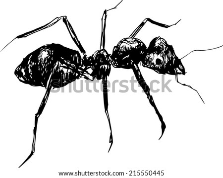 hand drawn ant