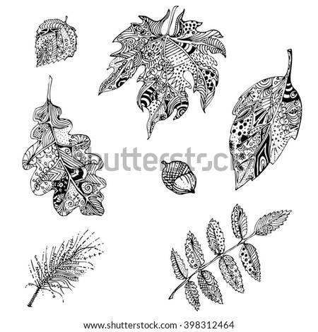 Hand Drawn Black White Doodle Leaves Of Mountain Ash Oak Apple Tree Pine