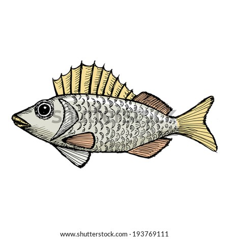 hand drawn, cartoon, sketch illustration of ruffe