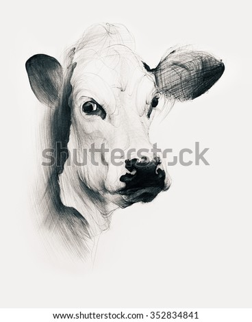 Hand drawn cow isolated on white background. Ballpoint pen drawing. - stock photo