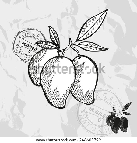Hand drawn decorative mango fruits, design elements. Can be used for cards, invitations, gift wrap, print, scrapbooking. Kitchen theme - stock photo