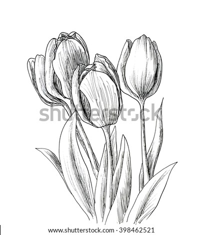 Hand drawn decorative tulips isolated on white. Hand drawn illustration. Ink drawing flowers. Contour pencil drawing. Hand drawn sketch. Drawn sketch of flowers. Doodles hand drawn. Flowers doodles. - stock photo