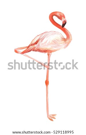 hand drawn hot pink and orange flamingo standing on one leg