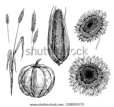 Hand drawn illustration of wheat, corn, pumpkin and sunflowers - stock photo
