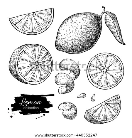 Hand Drawn Lime Lemon Set Whole Stock Illustration ...