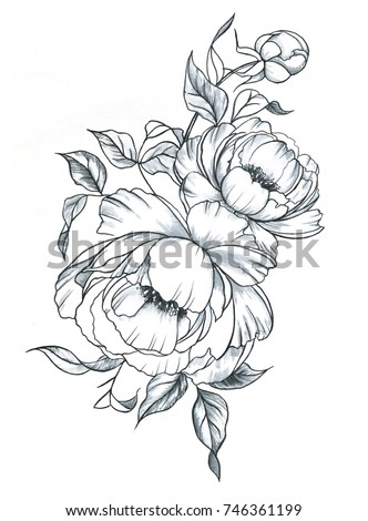 Watercolor Peony Stock Images Royalty Free Images