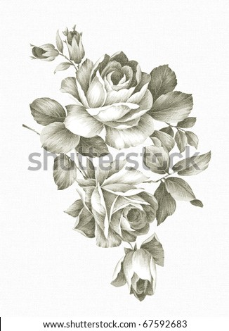 hand drawn Old-styled rose. - stock photo