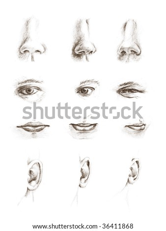 Hand drawn pencil sketches of eyes, ears, lips and noses - stock photo