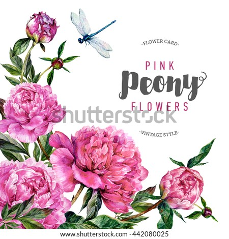 Hand drawn watercolor card template with pink peonies, green leaves and dragonfly. Vintage style - stock photo