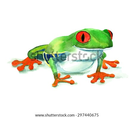 Hand drawn watercolor frog. Brightly tropical red-eyed frog.  - stock photo