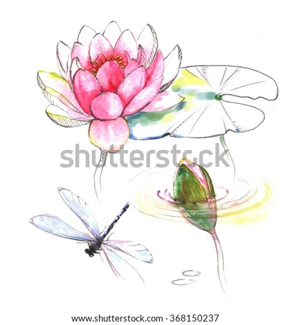Hand Drawn Watercolor Illustration Of The Dragonfly With Lotus Pink Flower Bud And Leaves