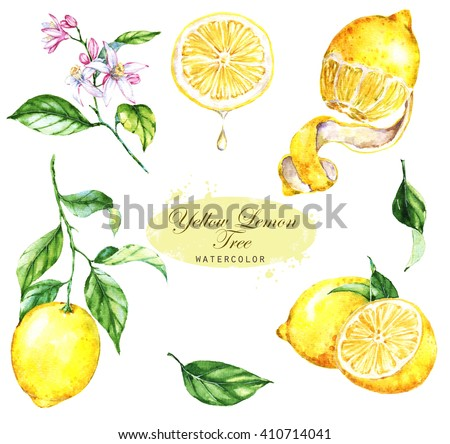 Hand-drawn watercolor illustration of the yellow lemons. Drawings of the sliced fruits, flowers and branches, isolated and close up on the white background. - stock photo
