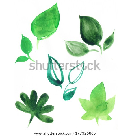 Hand drawn watercolor illustration. The green leaves on white.  - stock photo