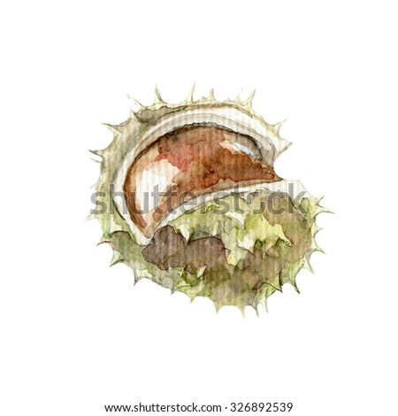 Hand drawn watercolor painting of chestnut isolated on white background - stock photo