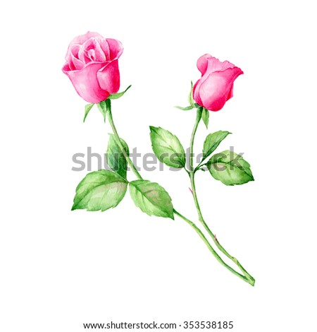 Hand drawn watercolor pink English Roses. Can be used as a greeting card for background, birthday, mother's day and so on. Romantic background for web pages, wedding invitations, wallpaper.