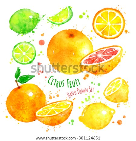 Hand drawn watercolor set of citrus fruit with paint splashes. - stock photo