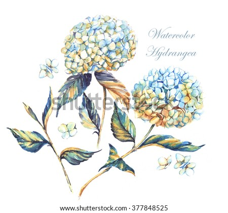 Hand-drawn watercolor white hydrangea flowers with golden decorative coloring. Floral isolated illustration of summer composition - stock photo