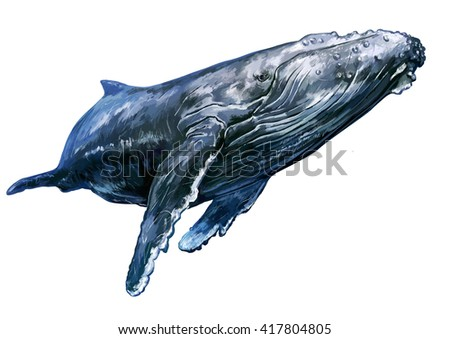 hand drawn whale illiustration - stock photo
