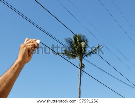 hand erasing power lines from a palm tree view - stock photo