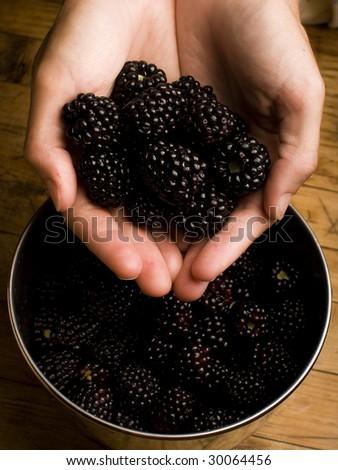 Hand full of fresh picked blackberry - stock photo
