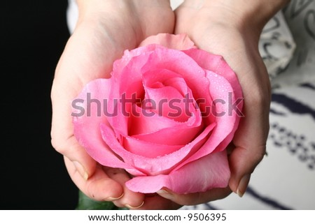 hand give rose