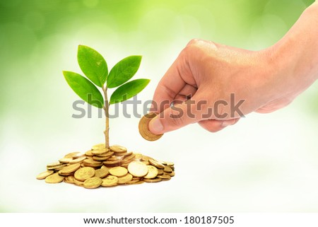 hand giving a golden coin to a tree growing from pile of coins / csr / green business / business ethics / good governance - stock photo
