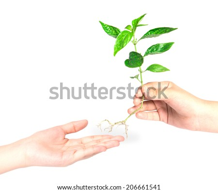 hand giving a tree  - stock photo