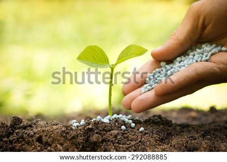 hand giving chemical fertilizer to plants growing in sequence of seed germination on soil, evolution concept - stock photo
