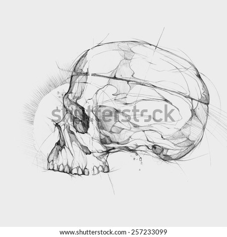 Hand graphics illustration - Drawing skull - stock photo