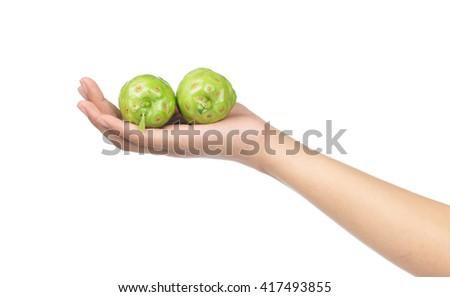 hand hold Noni Fruit isolated on white background. - stock photo