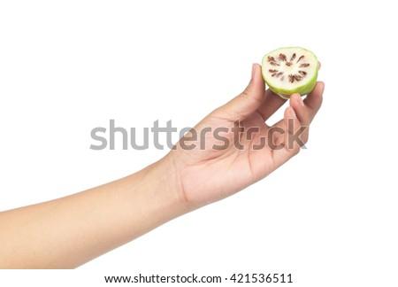 hand hold slice Noni Fruit isolated on white background. - stock photo