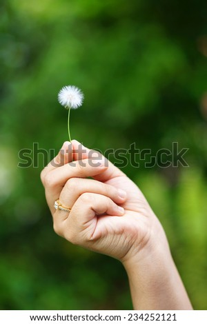 hand holding a dandelion - stock photo
