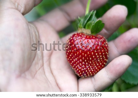 Hand Holding a delicious ripe strawberry - stock photo
