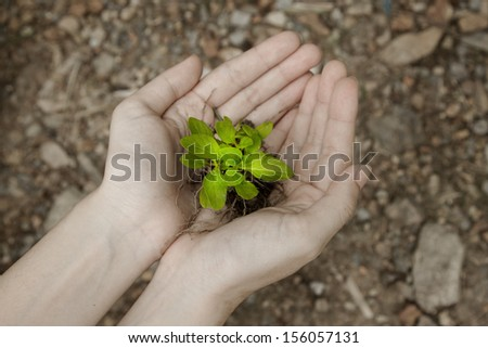 hand holding a fresh young plant. saving new life - stock photo