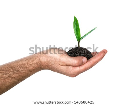 Hand holding a green sprout, isolated on white