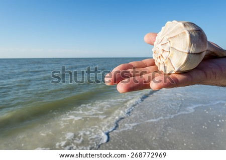 Hand Holding a Lighting Whelk Sea Shell on the Beach - stock photo