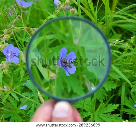 Hand holding a magnifying glass through which you can see a bee sitting on a flower  - stock photo
