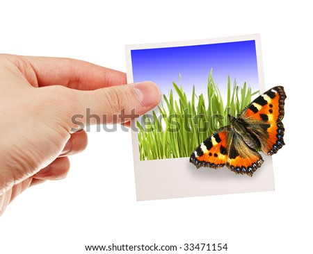 Hand holding a photo with butterfly on it - stock photo